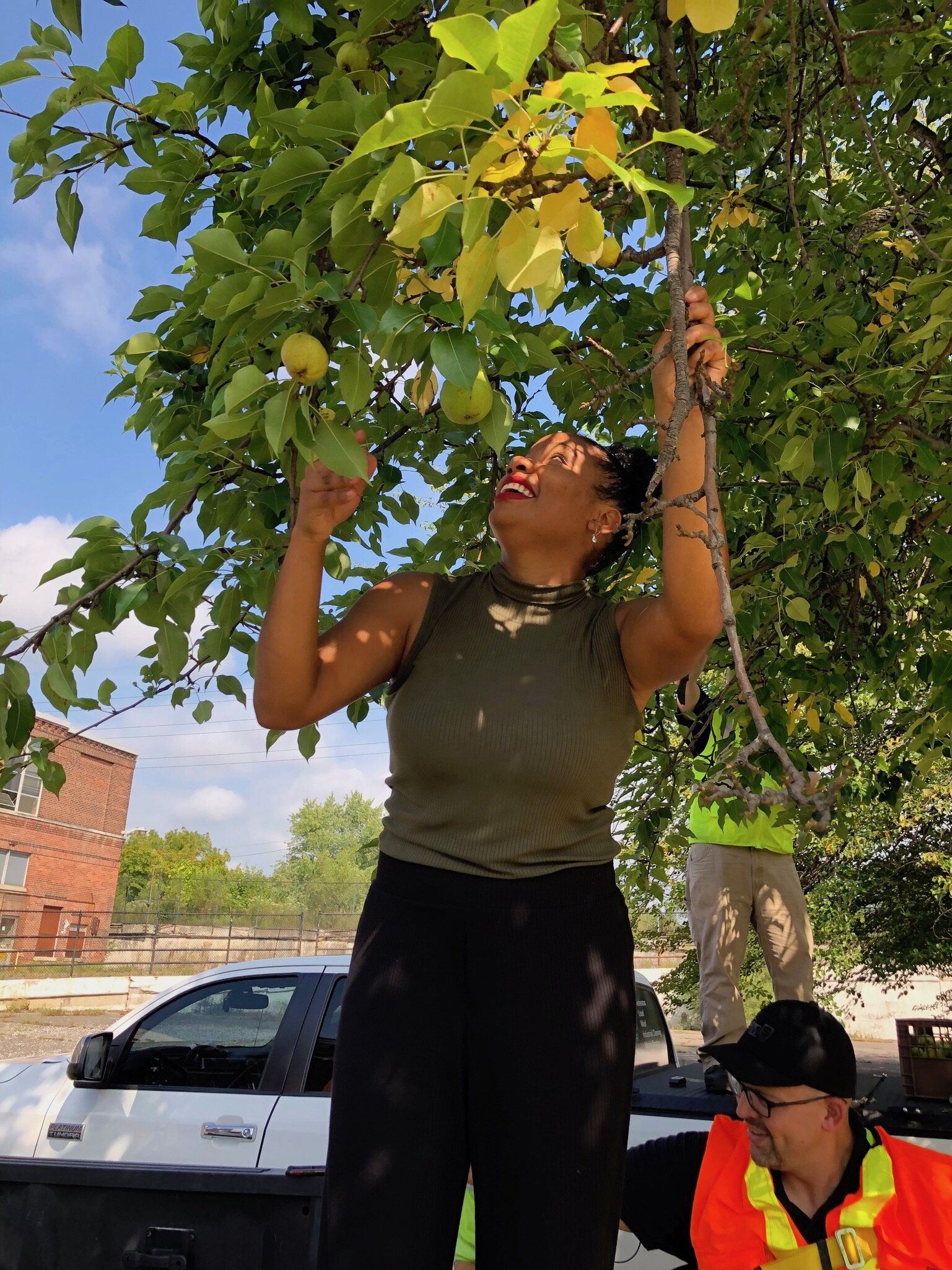 Volunteer Barbara Belli de Oliveira helps harvest pears from the tree at Electric Works.
