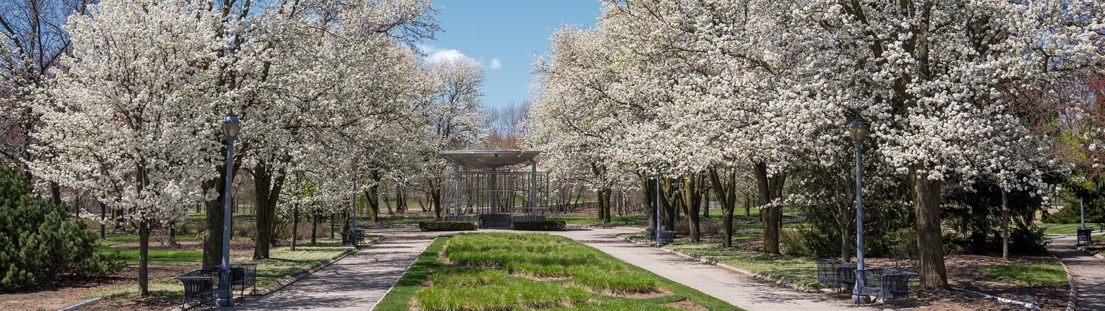 Flowering pear trees beautify Headwaters Park in downtown Fort Wayne.