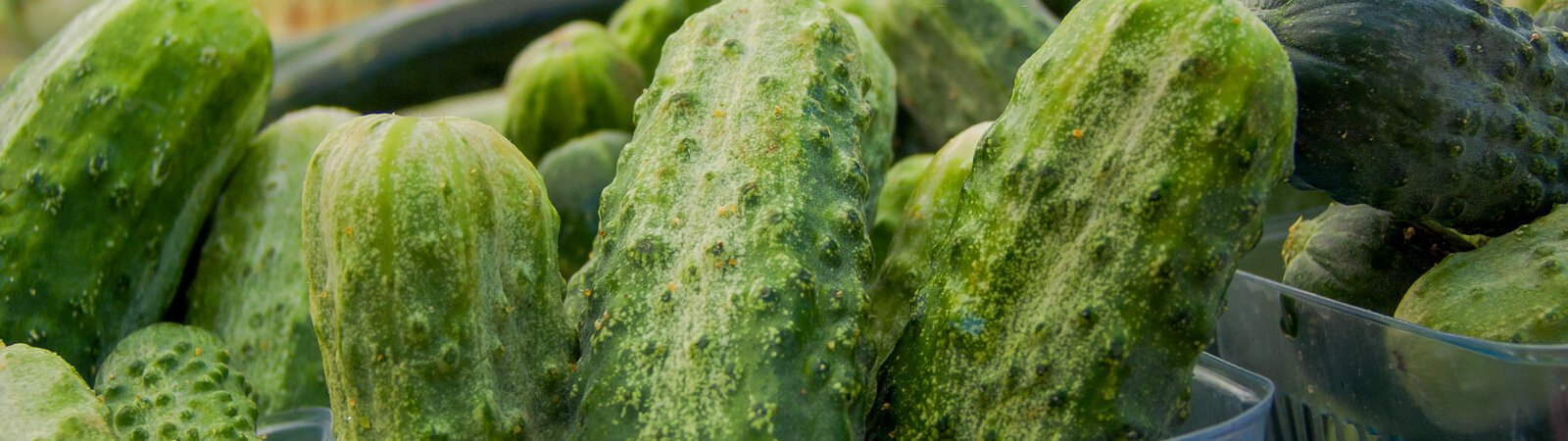 Fresh, locally grown cucumbers at the 2020 YLNI Farmers Market in Fort Wayne.