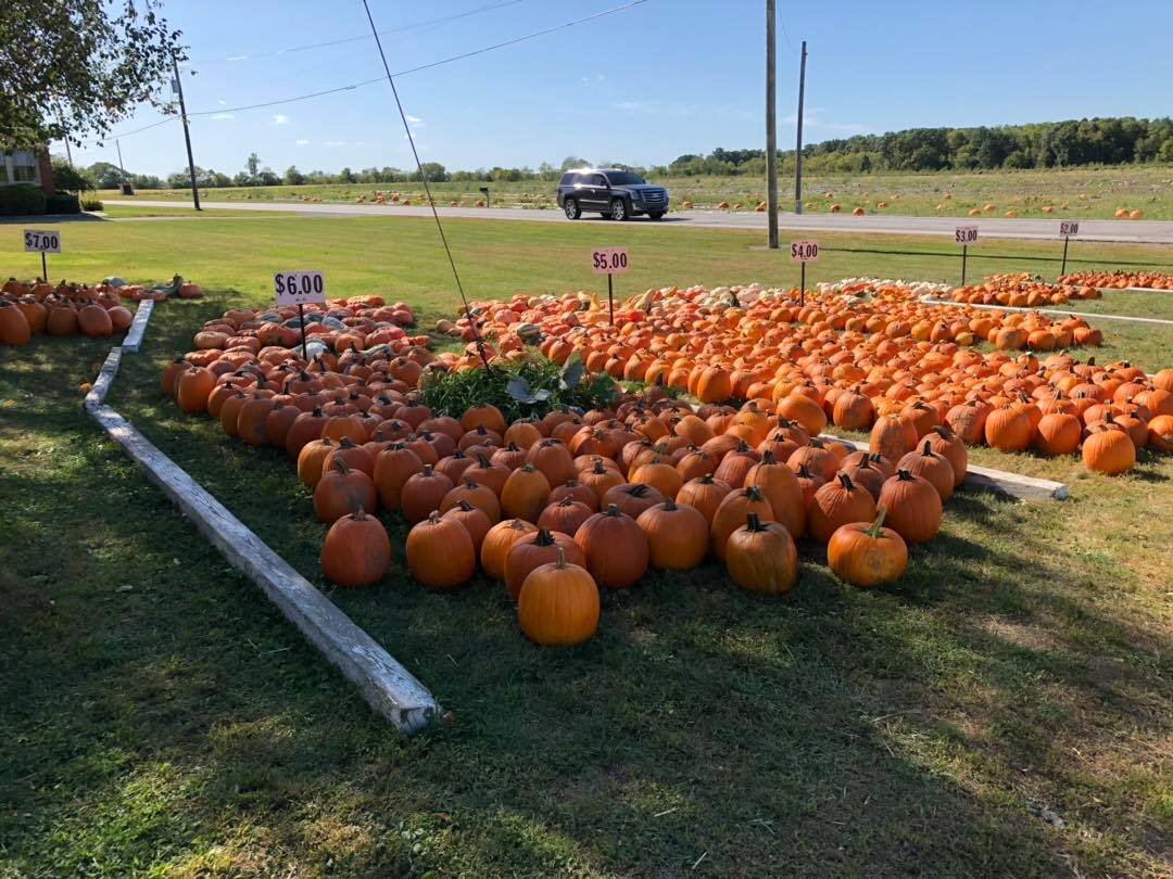 Kurtz Farm's U-Pick Pumpkin Patch offers various shapes and colors of pumpkins.