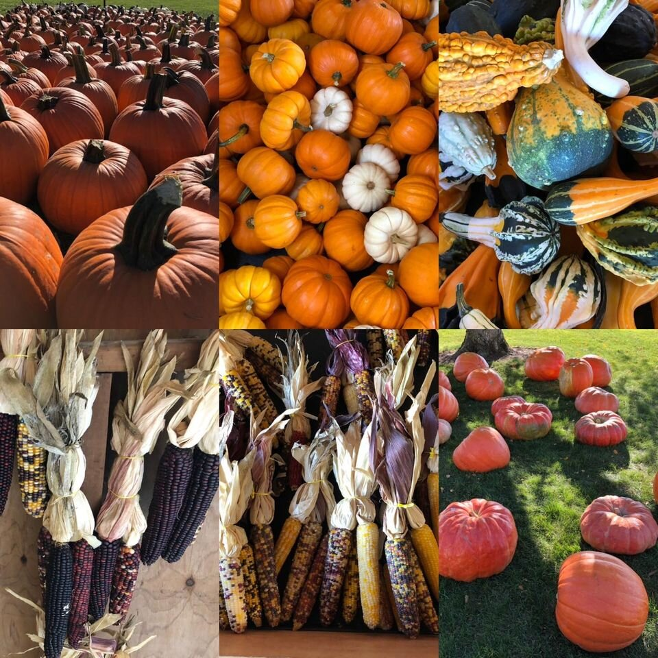 Kurtz Farm is full of fall favorites, from pumpkins to gourds and Indian corn.