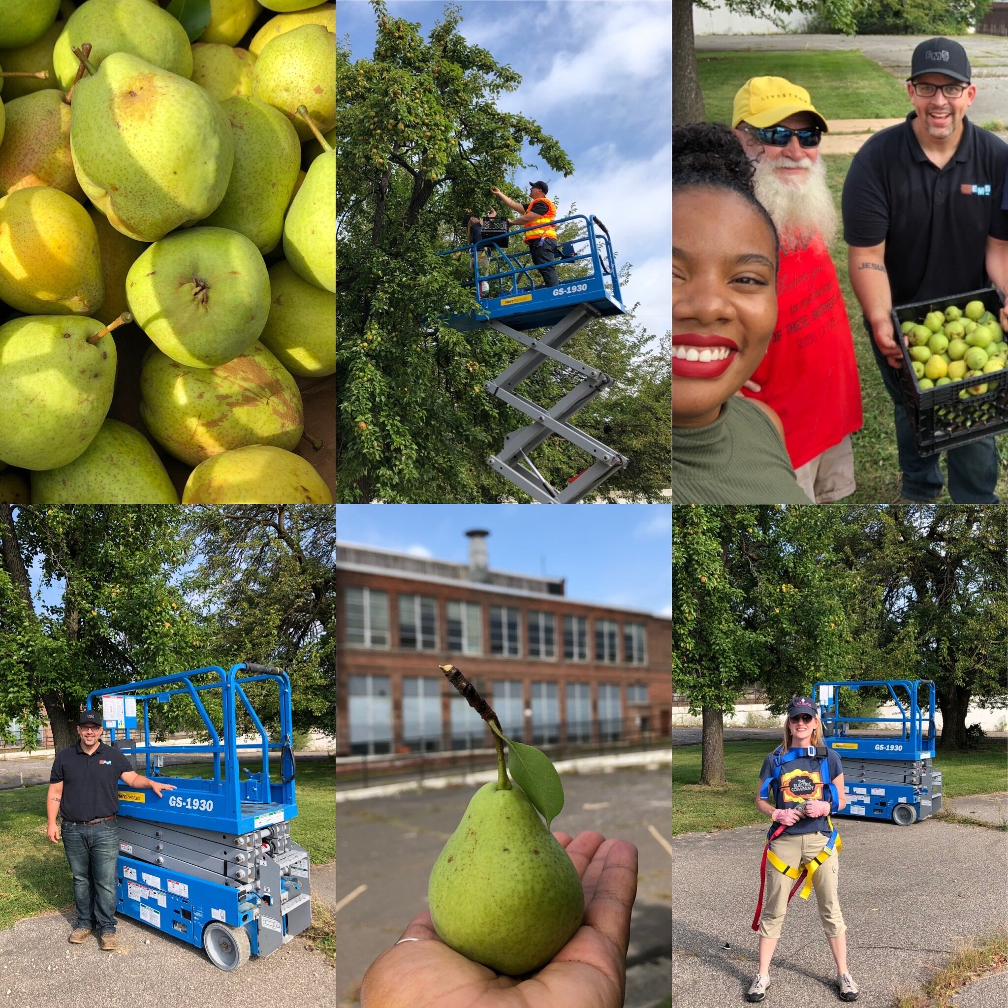 There's a project-within-a-project happening at Electric Works as volunteers work to harvest a beloved pear tree on campus and preserve its DNA for future generations.
